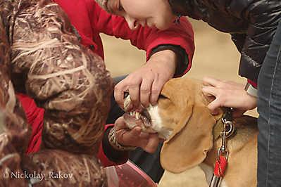 Осмотр собаки перед испытаниями
