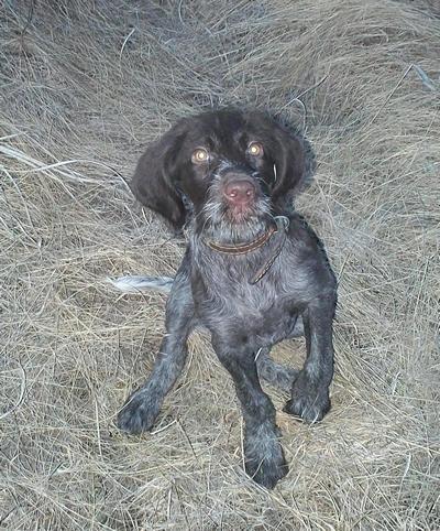 Прима (Хакасия), еще совсем щенок